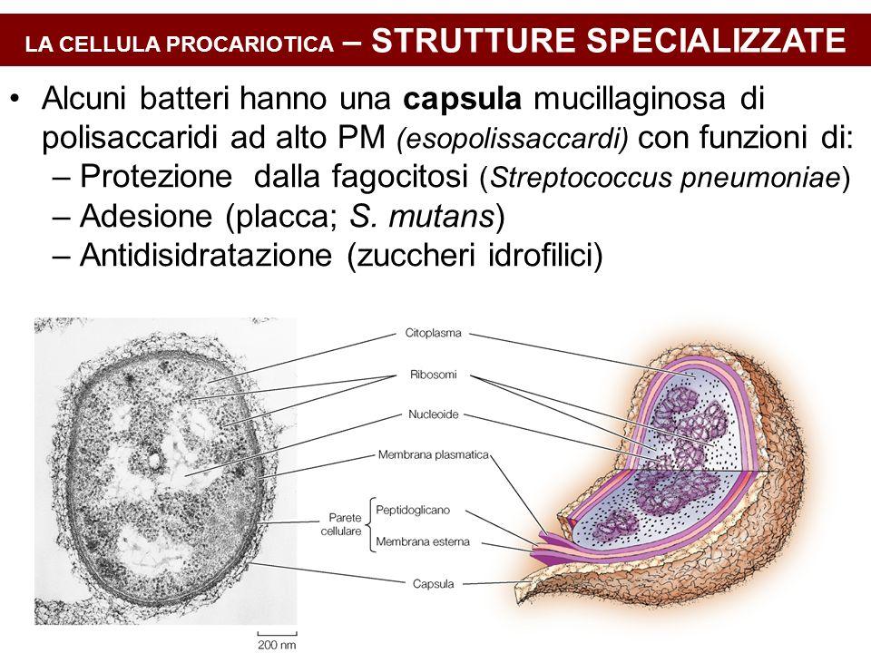 LA CELLULA PROCARIOTICA – STRUTTURE SPECIALIZZATE