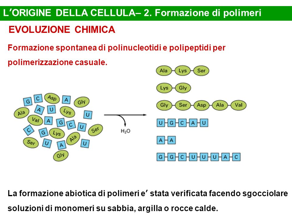 L'ORIGINE DELLA CELLULA– 2. Formazione di polimeri