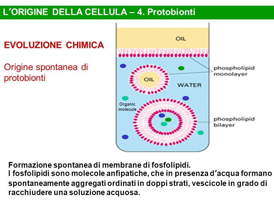 L'ORIGINE DELLA CELLULA – 4. Protobionti