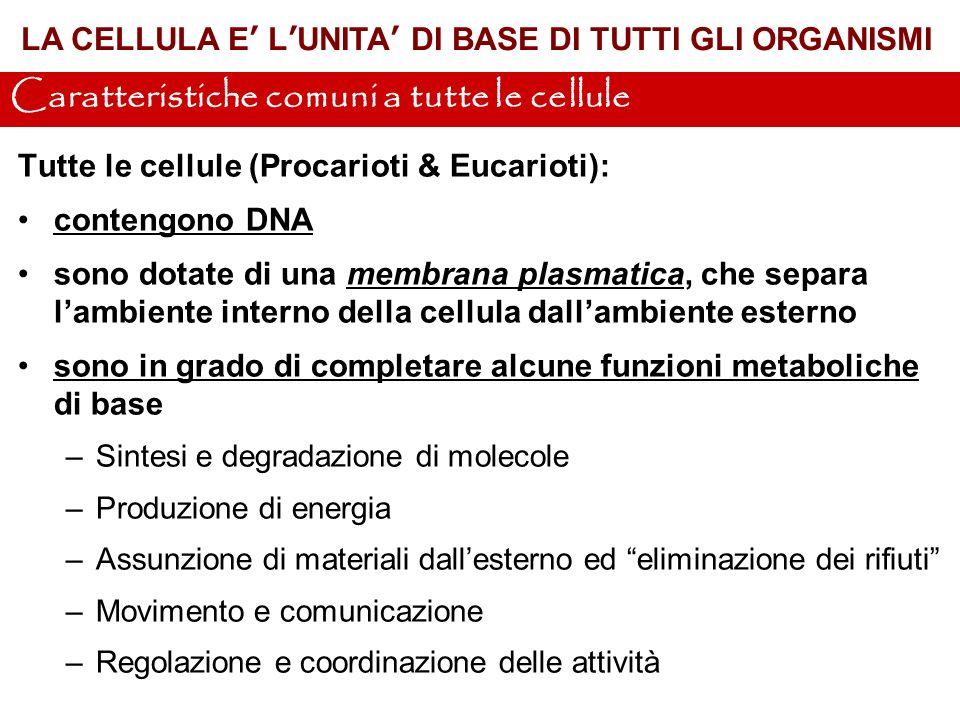 Caratteristiche comuni a tutte le cellule