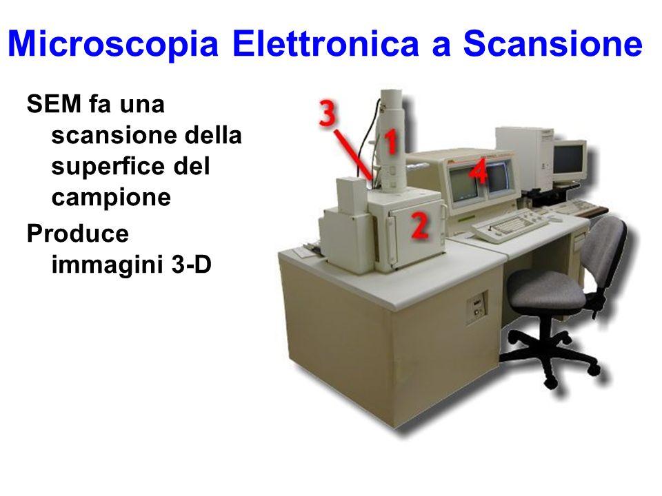 Microscopia Elettronica a Scansione