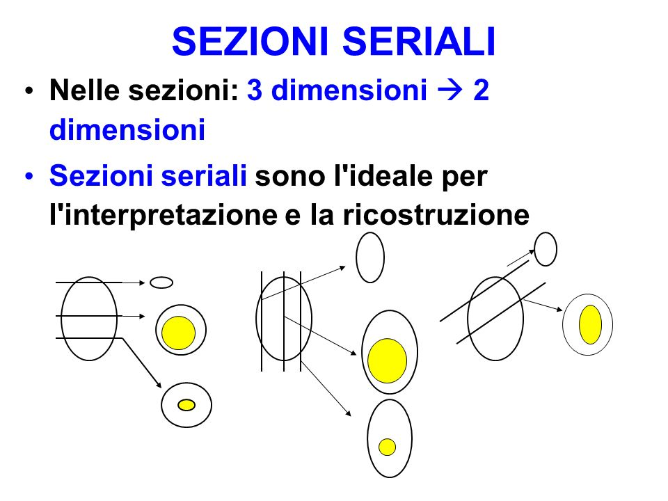 SEZIONI SERIALI Nelle sezioni: 3 dimensioni  2 dimensioni