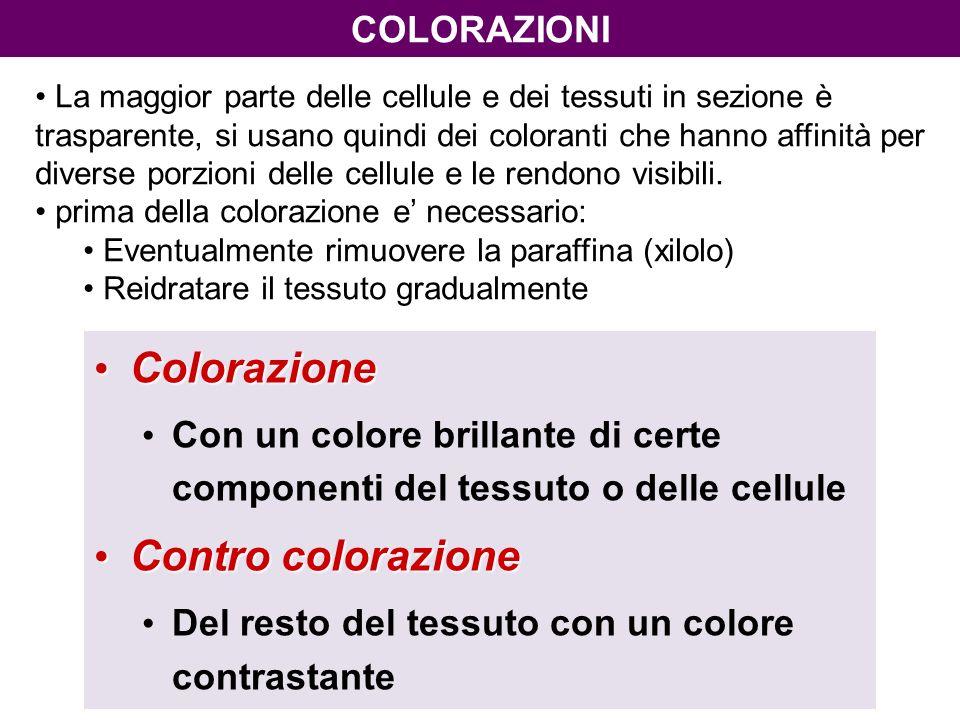 Colorazione Contro colorazione COLORAZIONI