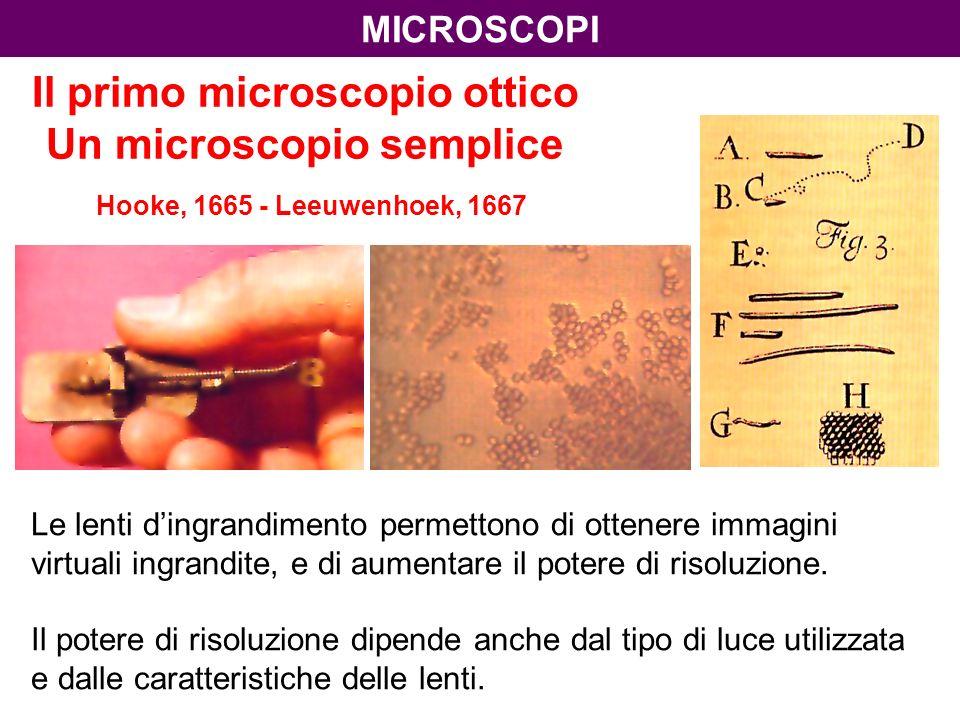 microscopi Il primo microscopio ottico Un microscopio semplice Hooke, 1665 - Leeuwenhoek, 1667.