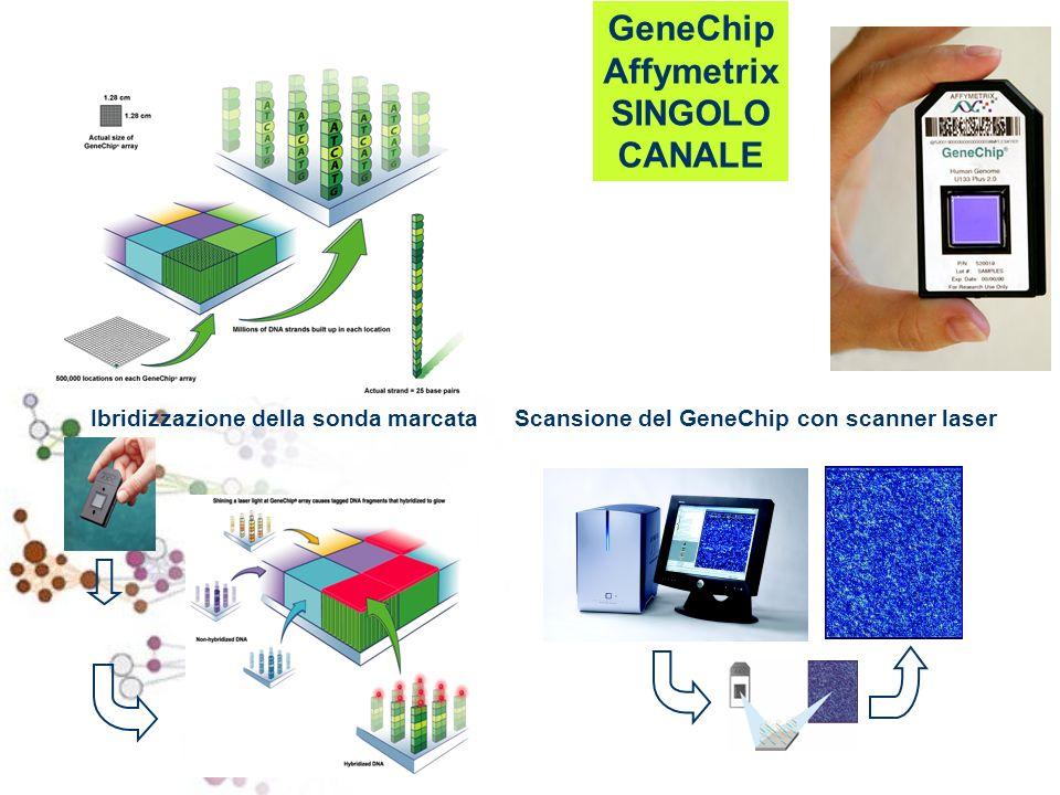 GeneChip Affymetrix SINGOLO CANALE