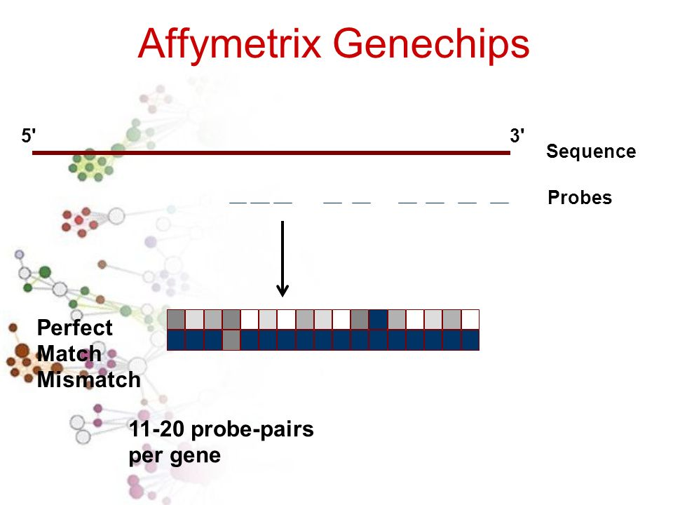 Affymetrix Genechips Perfect Match Mismatch 11-20 probe-pairs per gene