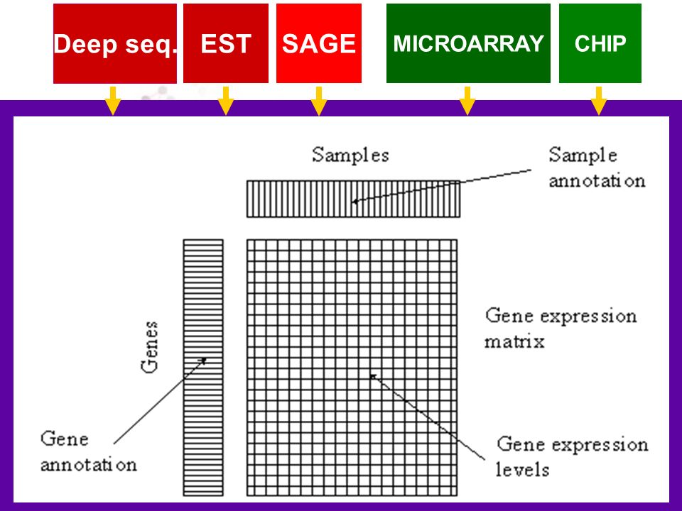 Deep seq. EST SAGE MICROARRAY CHIP