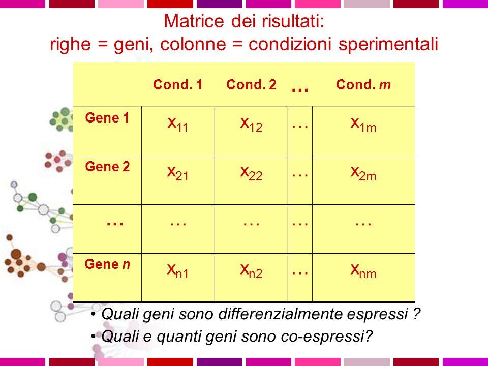 Matrice dei risultati: righe = geni, colonne = condizioni sperimentali