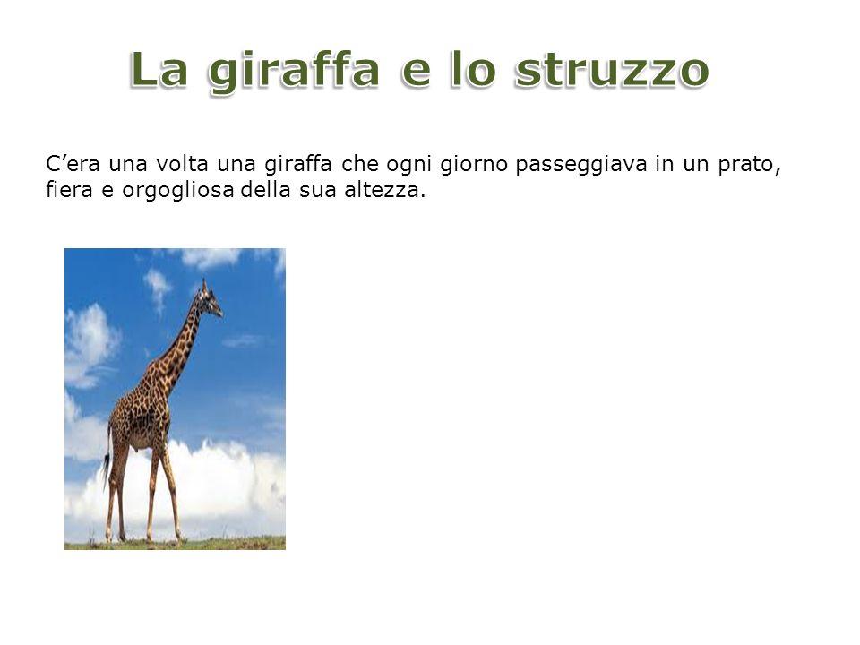 La giraffa e lo struzzo C'era una volta una giraffa che ogni giorno passeggiava in un prato, fiera e orgogliosa della sua altezza.