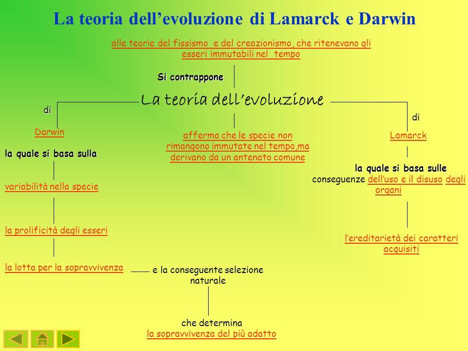 La teoria dell'evoluzione di Lamarck e Darwin