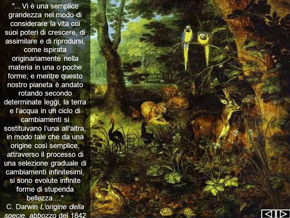 C. Darwin L'origine della specie, abbozzo del 1842