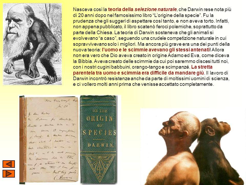 Nasceva così la teoria della selezione naturale, che Darwin rese nota più di 20 anni dopo nel famosissimo libro L'origine della specie .
