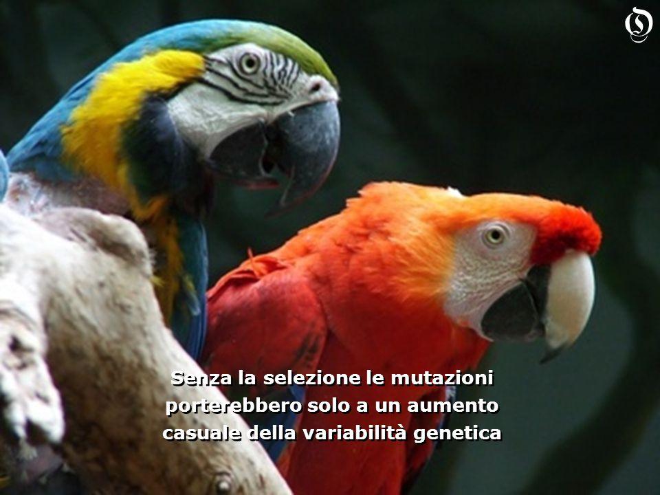 O Senza la selezione le mutazioni porterebbero solo a un aumento