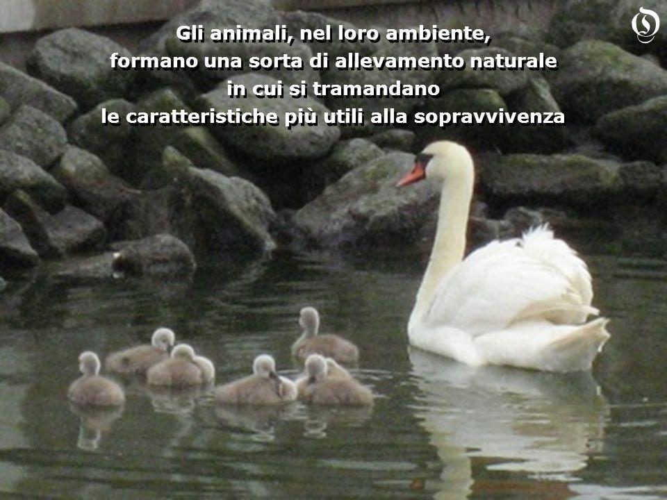 O Gli animali, nel loro ambiente,