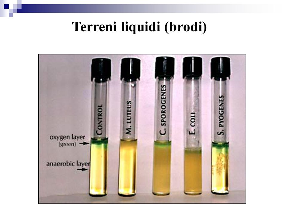 Terreni liquidi (brodi)