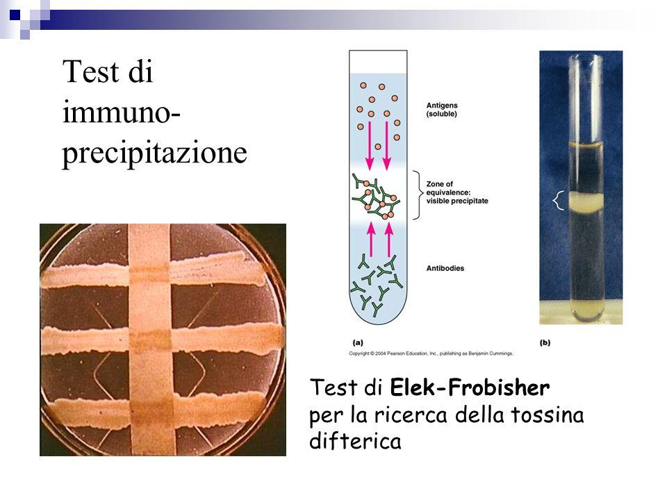 Test di immuno- precipitazione