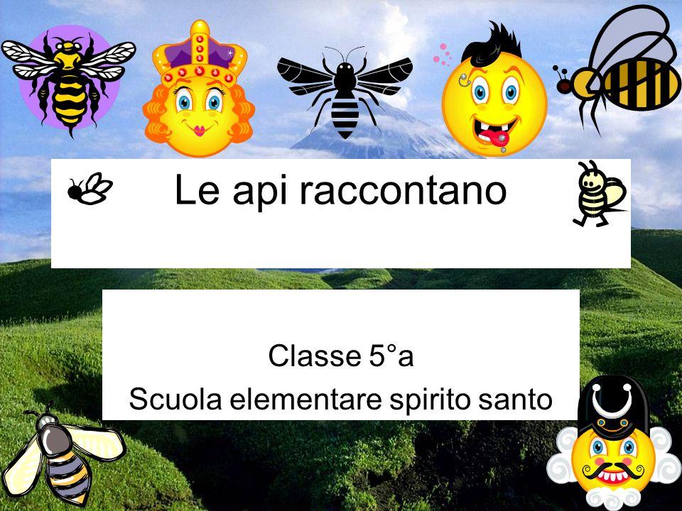 Classe 5°a Scuola elementare spirito santo