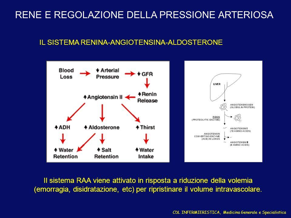 Il sistema RAA viene attivato in risposta a riduzione della volemia