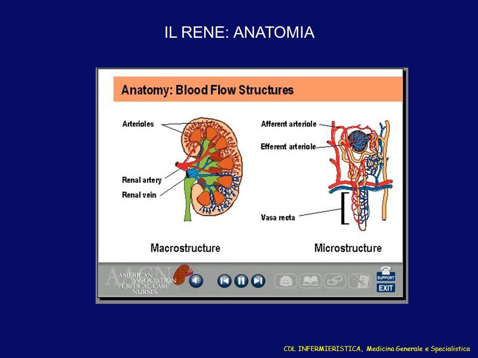 IL RENE: ANATOMIA CDL INFERMIERISTICA, Medicina Generale e Specialistica