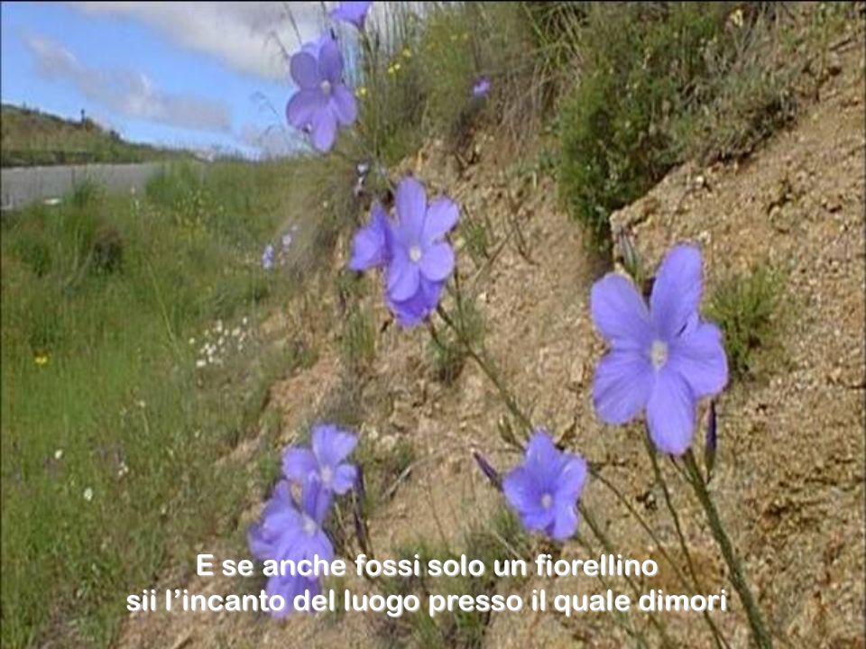 E se anche fossi solo un fiorellino sii l'incanto del luogo presso il quale dimori