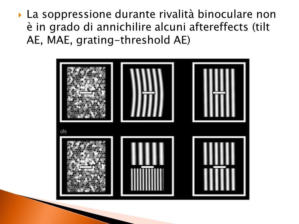 La soppressione durante rivalità binoculare non è in grado di annichilire alcuni aftereffects (tilt AE, MAE, grating-threshold AE)