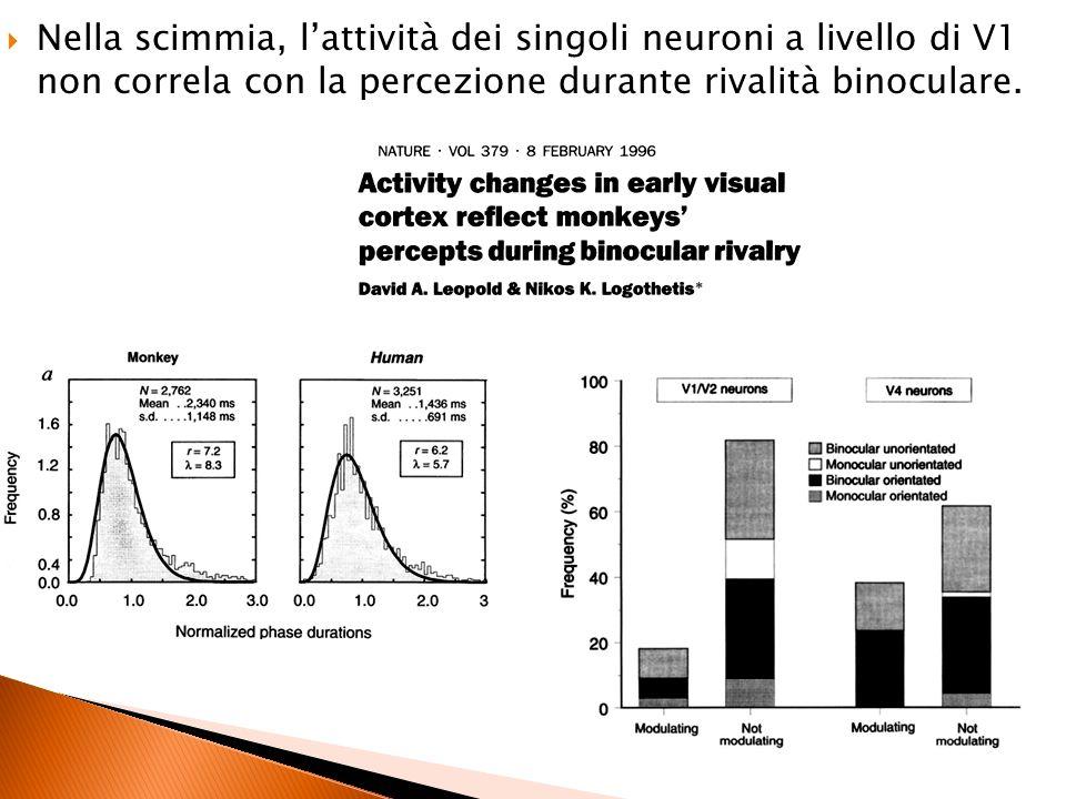 Nella scimmia, l'attività dei singoli neuroni a livello di V1 non correla con la percezione durante rivalità binoculare.