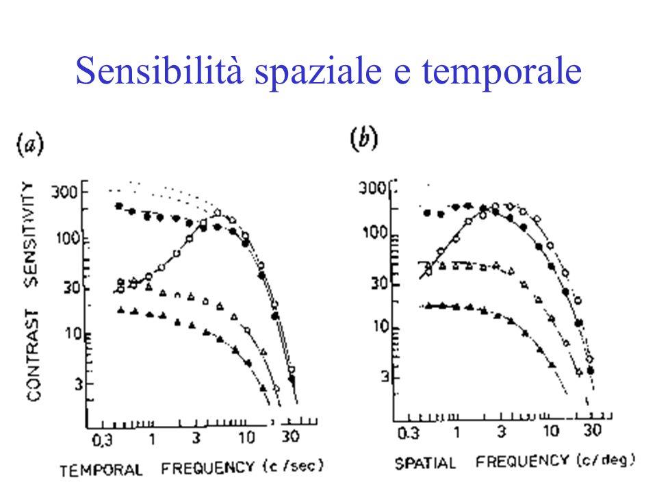 Sensibilità spaziale e temporale