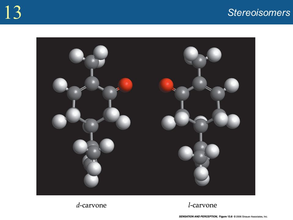 Stereoisomers Show two stereoisomers containing same atoms yet smelling different (Figure 13.8).