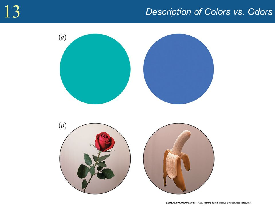 Description of Colors vs. Odors