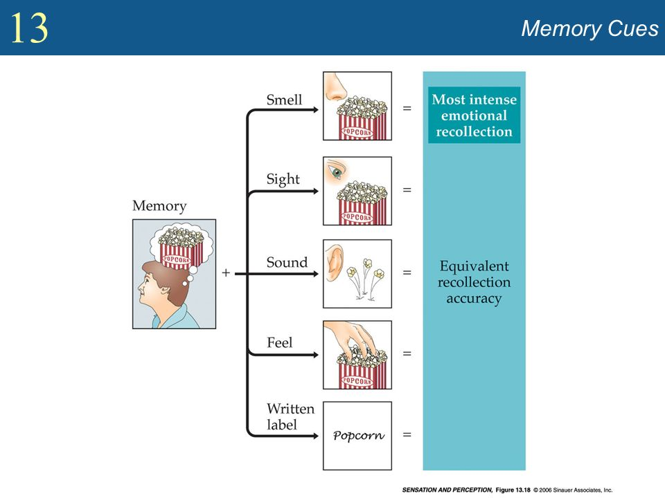 Memory Cues Show smell, sight, verbal labels that can elicit memories (Figure 13.18).