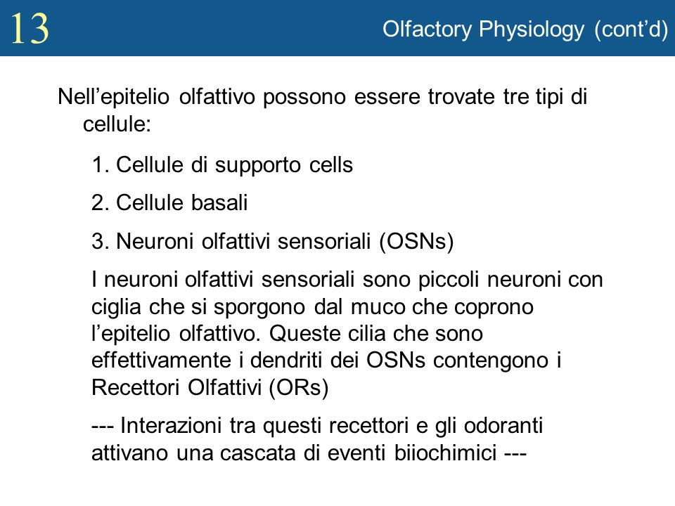 Olfactory Physiology (cont'd)