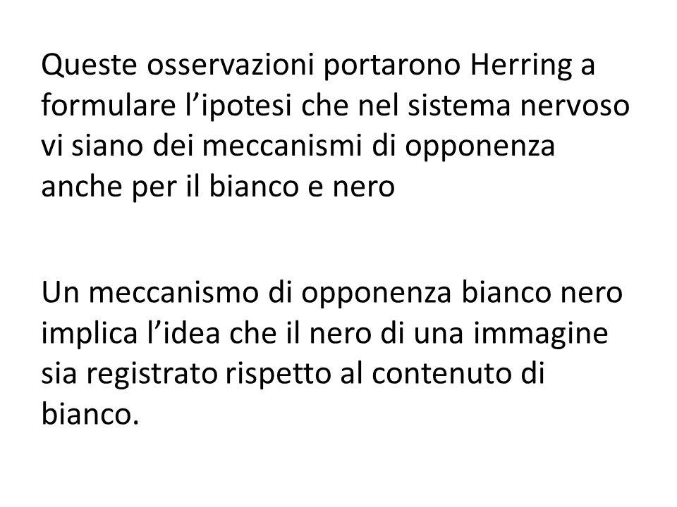 Queste osservazioni portarono Herring a formulare l'ipotesi che nel sistema nervoso vi siano dei meccanismi di opponenza anche per il bianco e nero