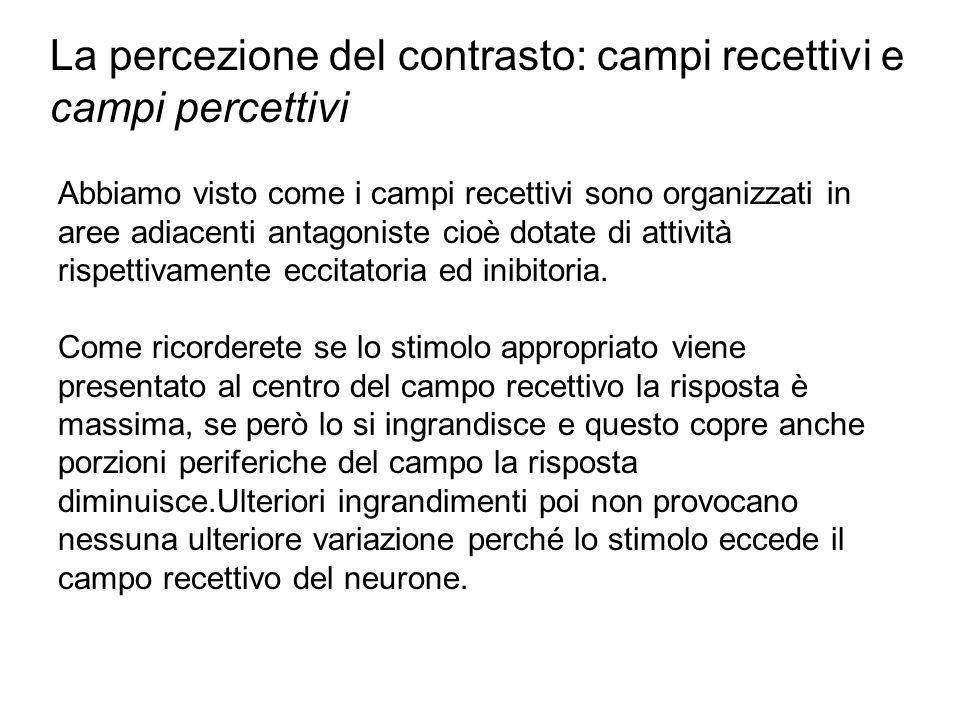 La percezione del contrasto: campi recettivi e campi percettivi
