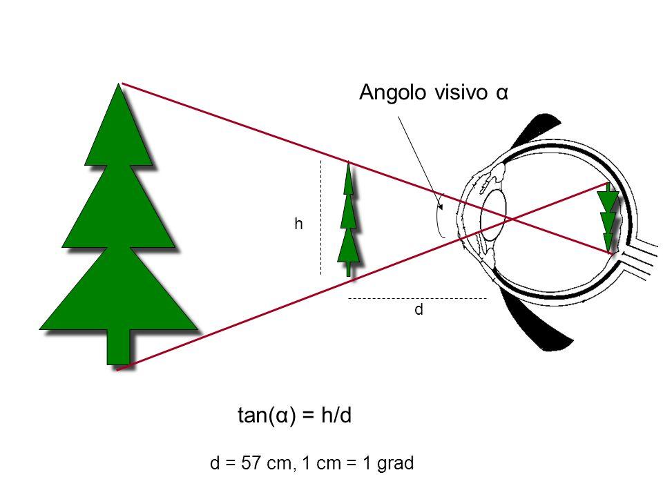 Angolo visivo α h d tan(α) = h/d d = 57 cm, 1 cm = 1 grad