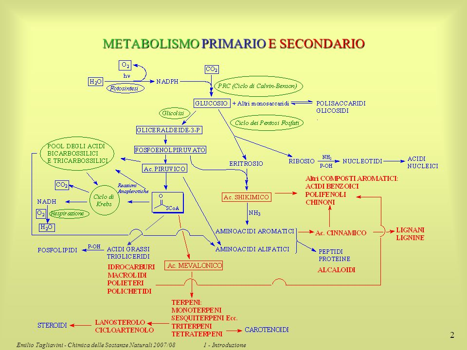 METABOLISMO PRIMARIO E SECONDARIO