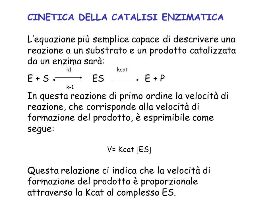 CINETICA DELLA CATALISI ENZIMATICA