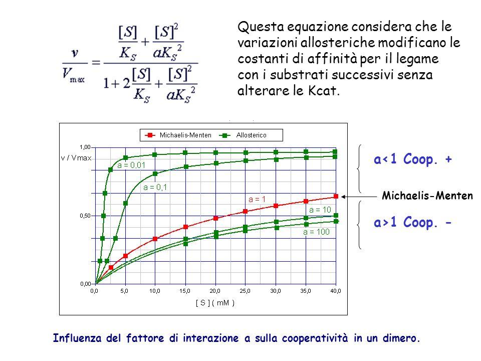 Questa equazione considera che le variazioni allosteriche modificano le costanti di affinità per il legame con i substrati successivi senza alterare le Kcat.