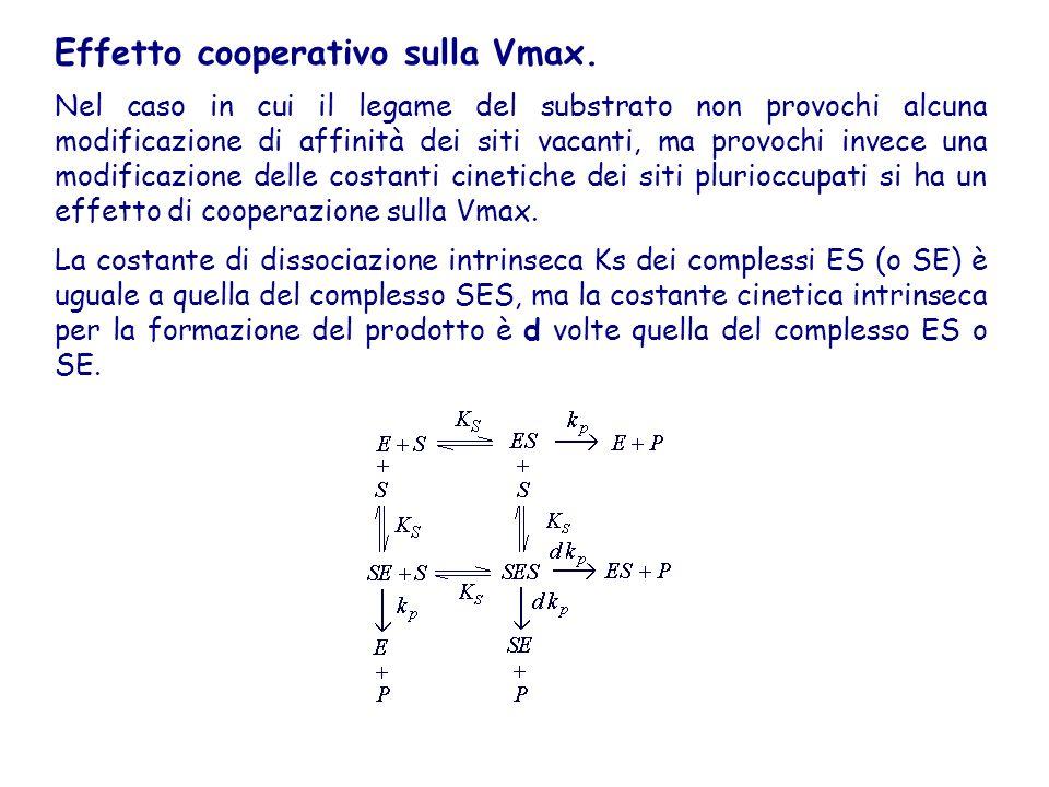 Effetto cooperativo sulla Vmax.