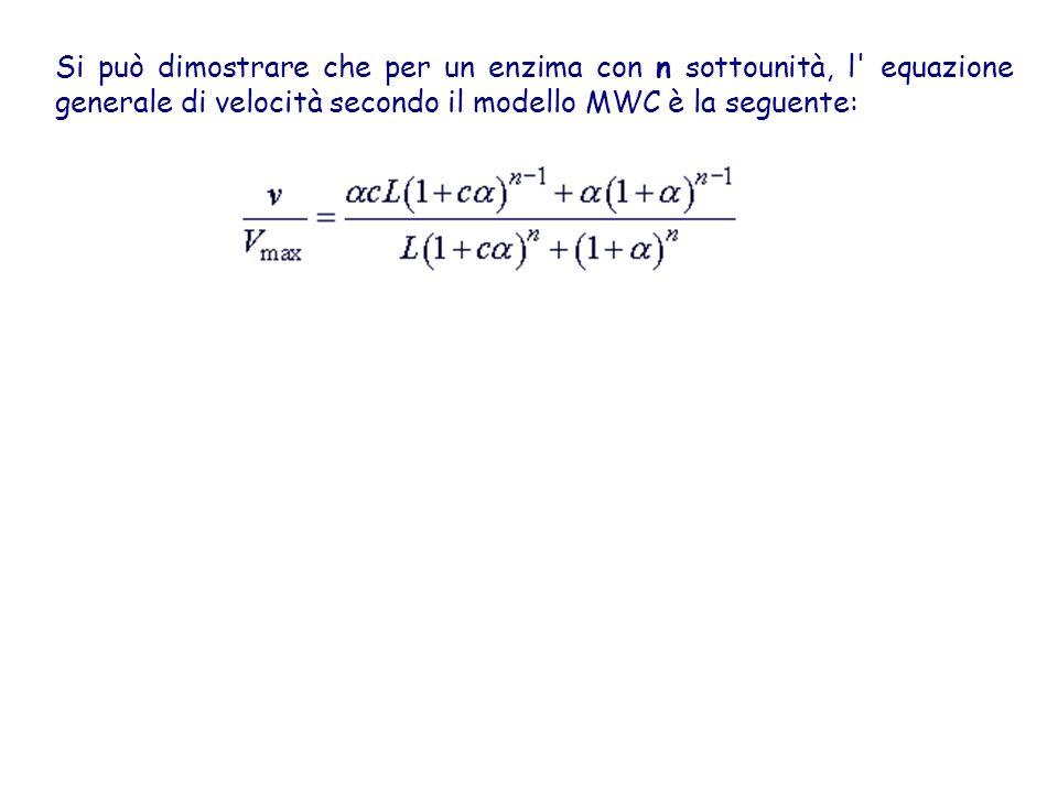 Si può dimostrare che per un enzima con n sottounità, l equazione generale di velocità secondo il modello MWC è la seguente: