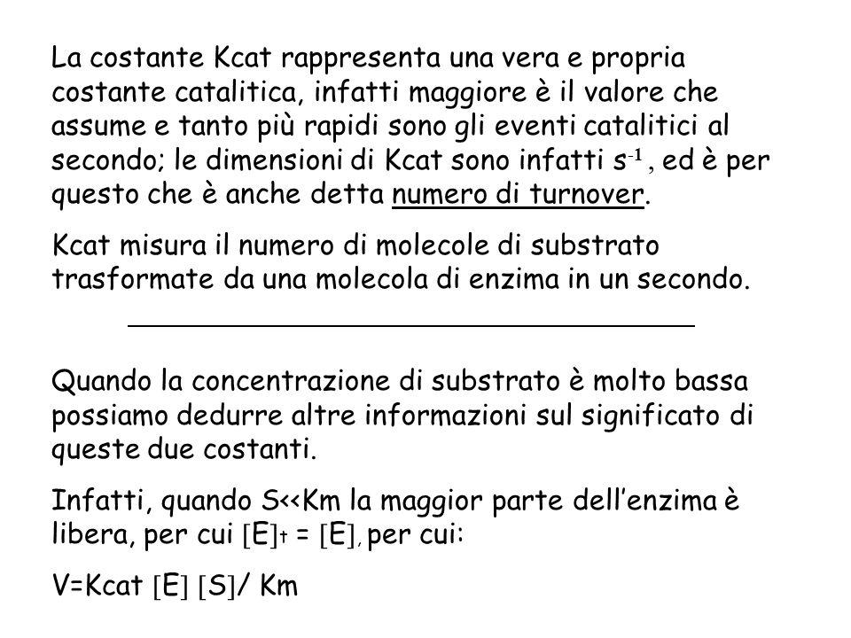 La costante Kcat rappresenta una vera e propria costante catalitica, infatti maggiore è il valore che assume e tanto più rapidi sono gli eventi catalitici al secondo; le dimensioni di Kcat sono infatti s-1 , ed è per questo che è anche detta numero di turnover.