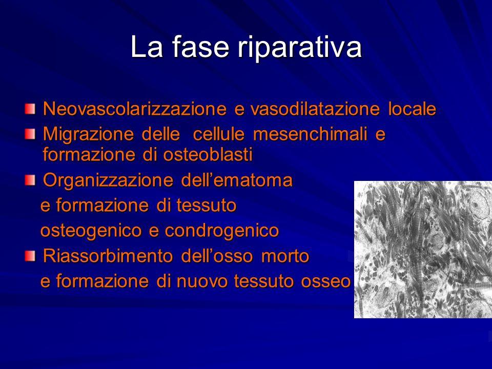 La fase riparativa Neovascolarizzazione e vasodilatazione locale