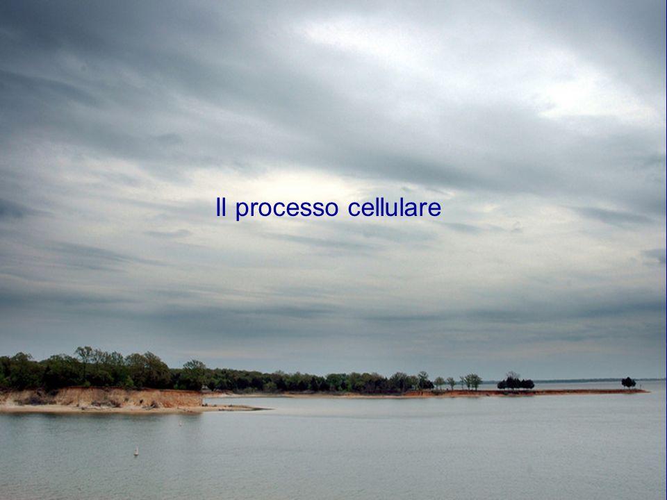 Il processo cellulare