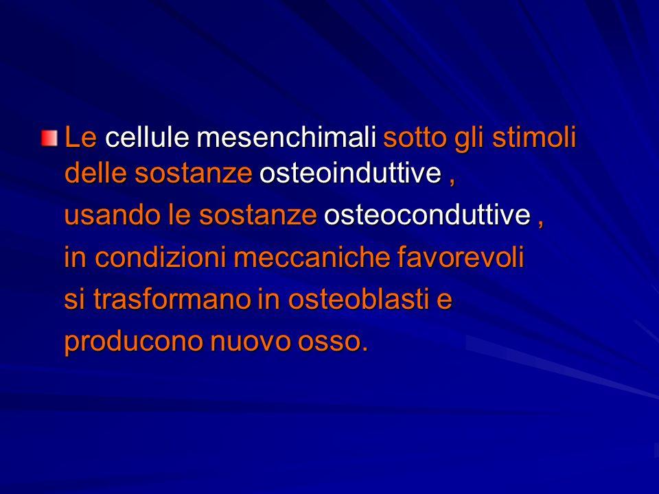 Le cellule mesenchimali sotto gli stimoli delle sostanze osteoinduttive ,