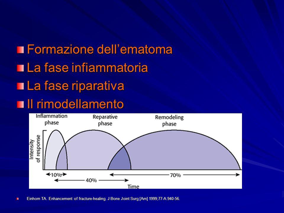 Formazione dell'ematoma La fase infiammatoria La fase riparativa