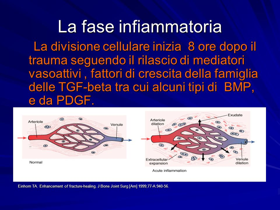 La fase infiammatoria