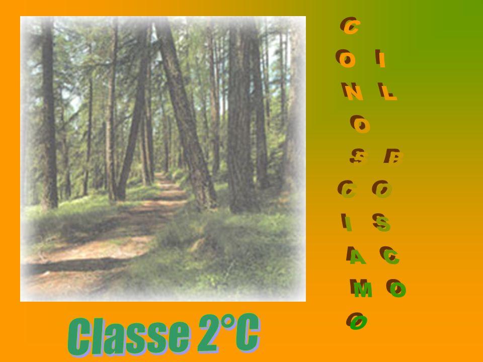 CONOSCIAMO IL BOSCO Classe 2°C