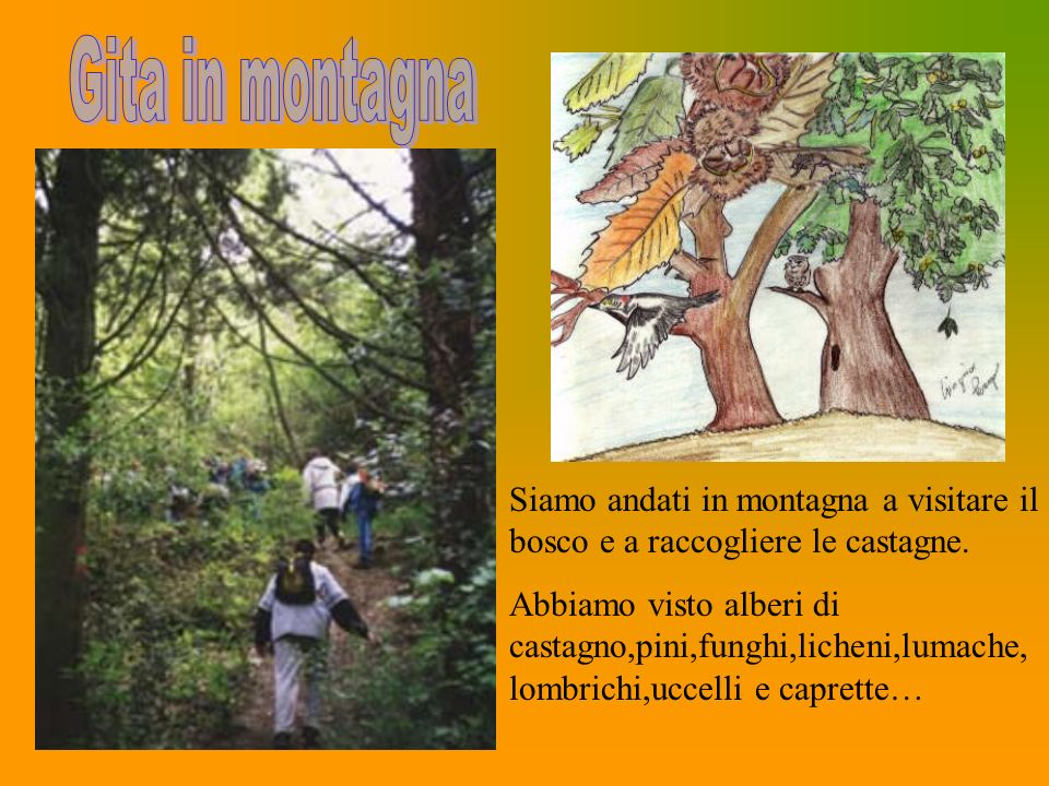 Gita in montagna Siamo andati in montagna a visitare il bosco e a raccogliere le castagne.