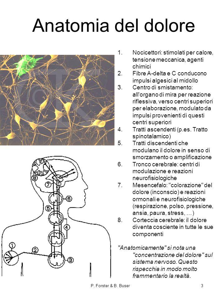 Anatomia del dolore Nocicettori: stimolati per calore, tensione meccanica, agenti chimici. Fibre A-delta e C conducono impulsi algesici al midollo.