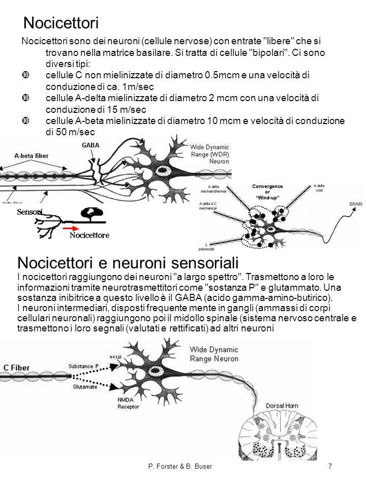 Nocicettori e neuroni sensoriali