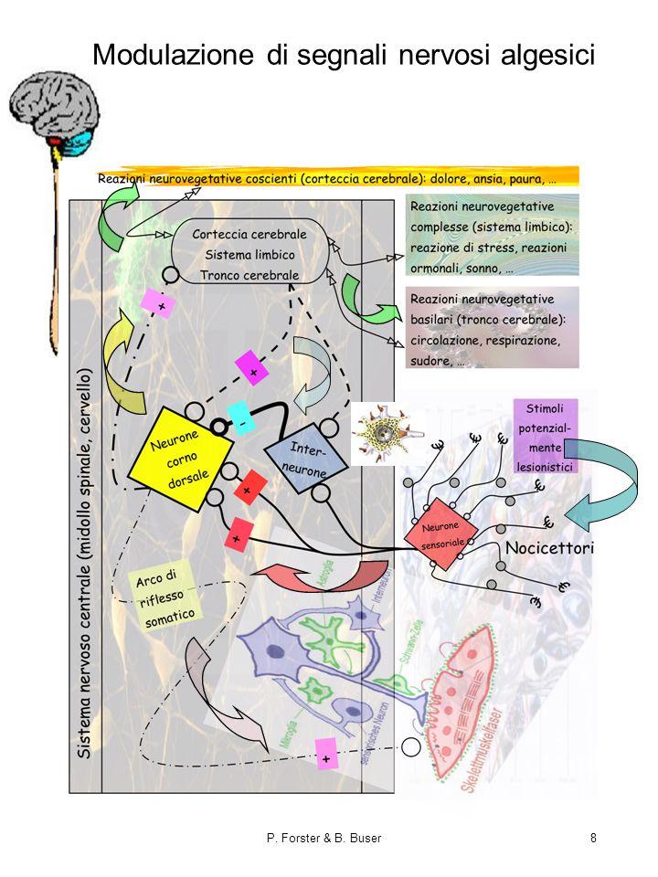 Modulazione di segnali nervosi algesici